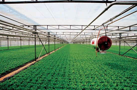 现代化的温室大棚,已经配上各种设施来调节温度和湿度。 图:新浪网